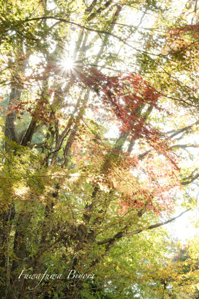 森の秋 **_d0344864_18160786.jpg