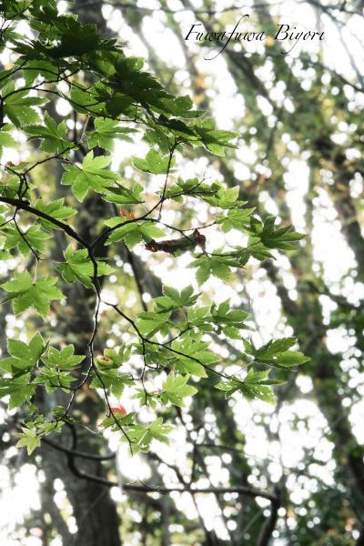 森の秋 **_d0344864_18161380.jpg