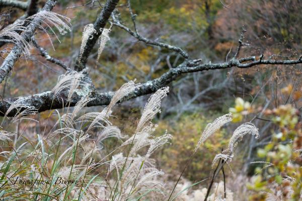 森の秋 **_d0344864_18161889.jpg