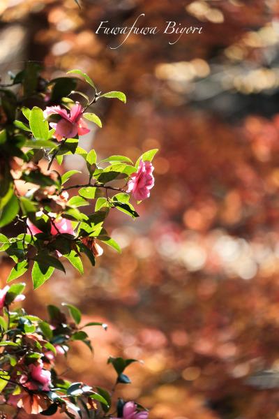 森の秋 **_d0344864_18163082.jpg