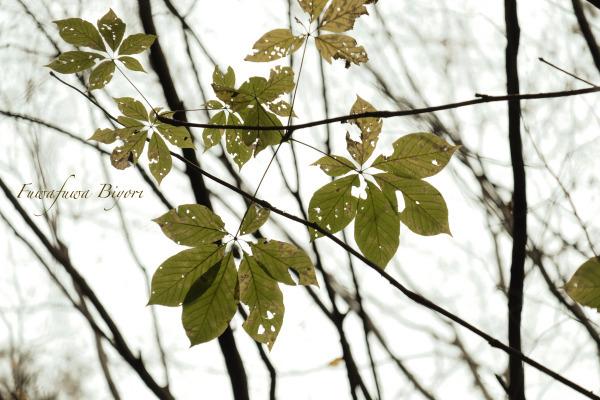 森の秋 **_d0344864_18163568.jpg