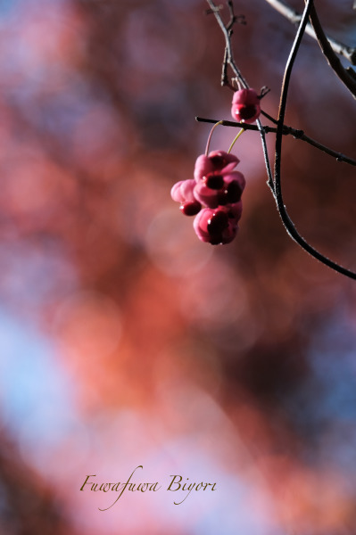 森の秋 **_d0344864_18164005.jpg