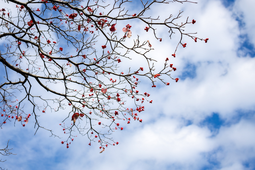 青空に赤く_a0261169_15385811.jpg