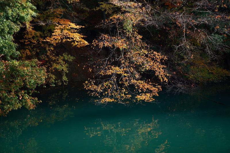 みどり市 草木湖展望台の大モミジ_e0165983_09571165.jpg