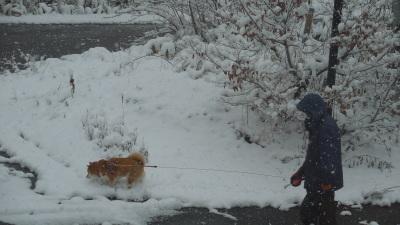 11月23日 金曜日  1度   雪_f0210811_09513526.jpg