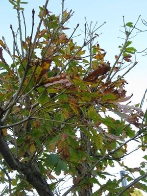 落ち葉の舞い散る・・・_f0129726_19133501.jpg