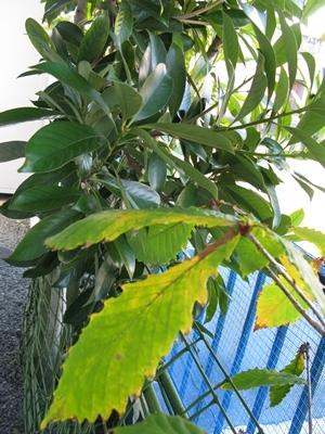 落ち葉の舞い散る・・・_f0129726_20575367.jpg