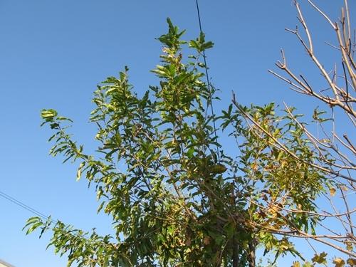 落ち葉の舞い散る・・・_f0129726_20591372.jpg