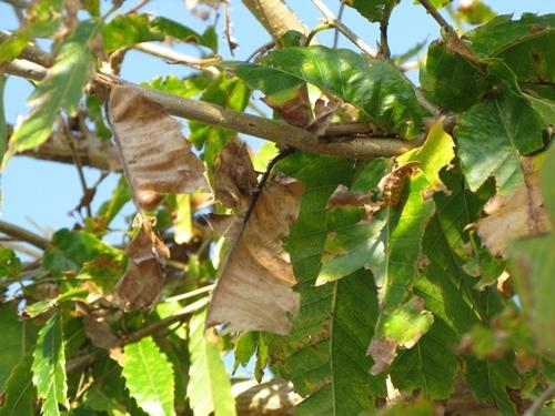 落ち葉の舞い散る・・・_f0129726_20592560.jpg