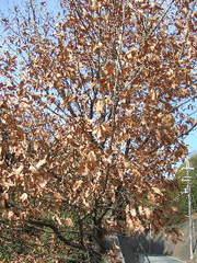 落ち葉の舞い散る・・・_f0129726_21313161.jpg