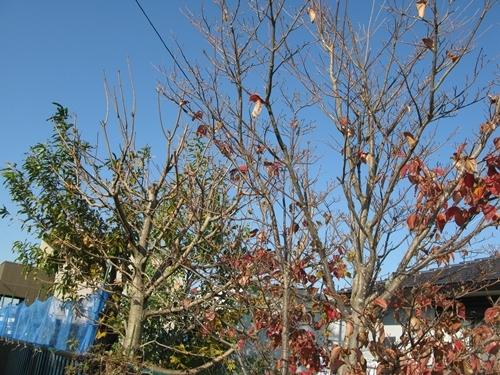落ち葉の舞い散る・・・_f0129726_21582120.jpg