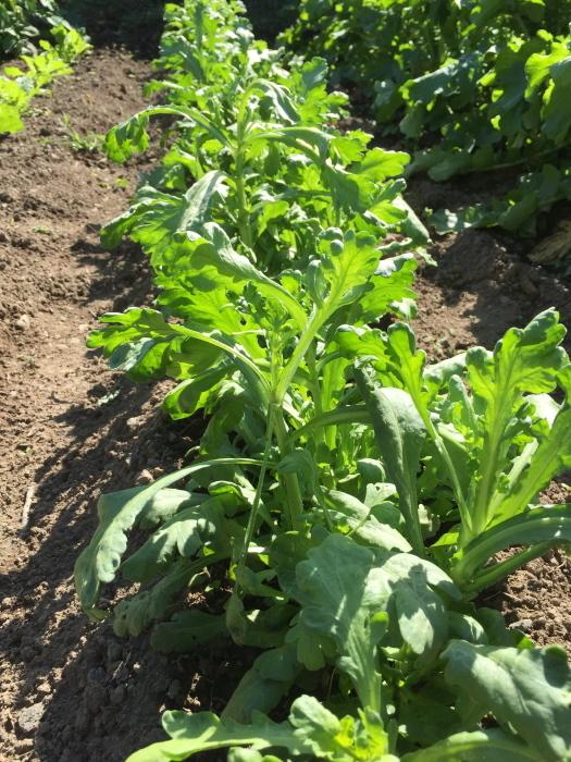 菜園3_f0091634_21295128.jpg