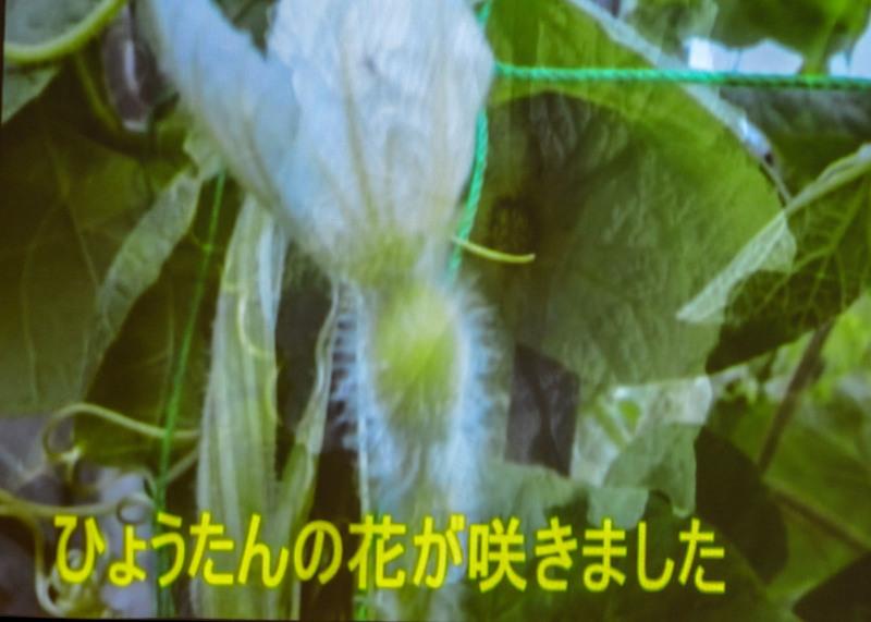 たっきーフラスタジオ発表会 2018 ⑲ たっきーひょうたんクラブ_d0246136_22265685.jpg