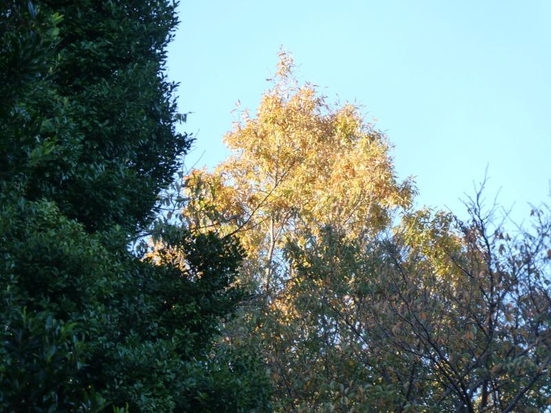 木のツリー試作・イベント準備・・・うみべの森_c0108460_19221467.jpg