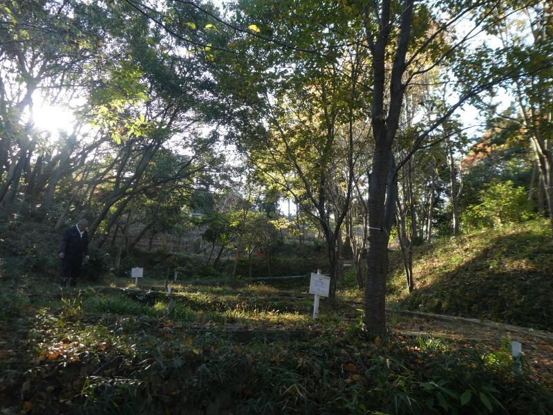 木のツリー試作・イベント準備・・・うみべの森_c0108460_19233853.jpg