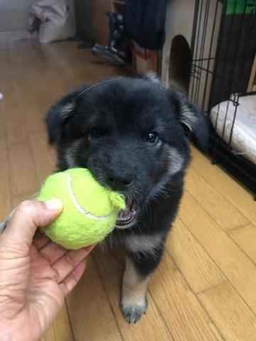 【犬・移動先募集】センター(支所)収容(11/17訪問)_f0242002_10512137.jpg