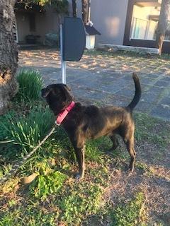 【犬・移動先募集】センター(支所)収容(11/17訪問)_f0242002_10525772.jpg