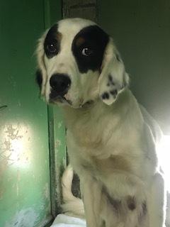 【犬・移動先募集】センター(支所)収容(11/17訪問)_f0242002_11132844.jpg