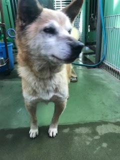 【犬・移動先募集】センター(支所)収容(11/17訪問)_f0242002_11195422.jpg