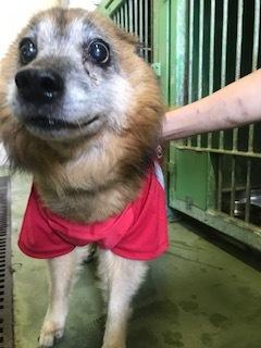 【犬・移動先募集】センター(支所)収容(11/17訪問)_f0242002_11510663.jpg