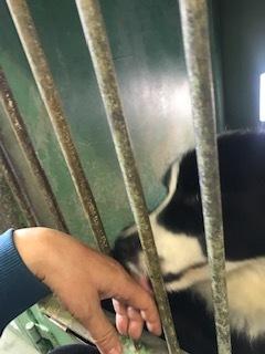 【犬・移動先募集】センター(支所)収容(11/17訪問)_f0242002_12590970.jpg