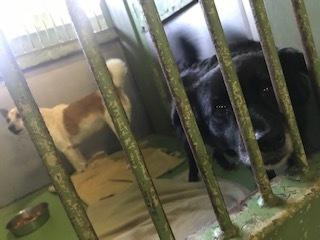 【犬・移動先募集】センター(支所)収容(11/17訪問)_f0242002_13004082.jpg