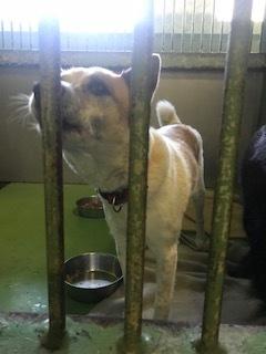 【犬・移動先募集】センター(支所)収容(11/17訪問)_f0242002_13005007.jpg