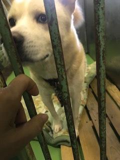 【犬・移動先募集】センター(支所)収容(11/17訪問)_f0242002_13033981.jpg