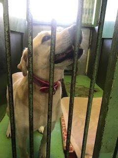 【犬・移動先募集】センター(支所)収容(11/17訪問)_f0242002_13051920.jpg