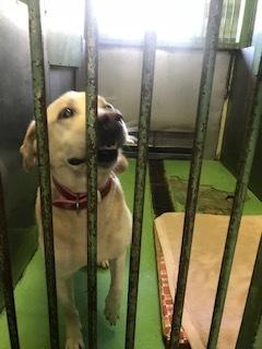 【犬・移動先募集】センター(支所)収容(11/17訪問)_f0242002_13052421.jpg