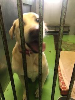 【犬・移動先募集】センター(支所)収容(11/17訪問)_f0242002_13053698.jpg
