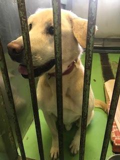 【犬・移動先募集】センター(支所)収容(11/17訪問)_f0242002_14271099.jpg