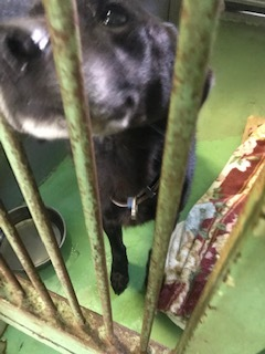 【犬・移動先募集】センター(支所)収容(11/17訪問)_f0242002_14273944.jpg