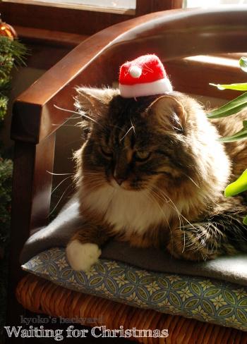 次はクリスマスだよね_b0253205_10331659.jpg