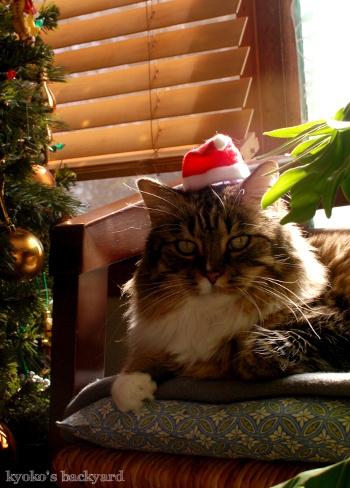 次はクリスマスだよね_b0253205_10333463.jpg