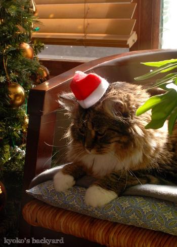 次はクリスマスだよね_b0253205_10340509.jpg