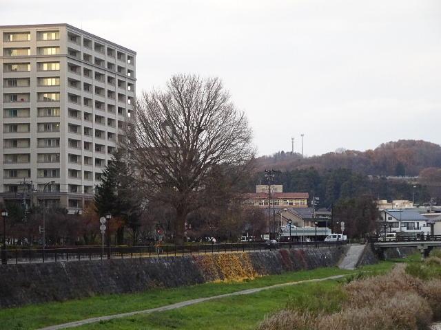 中津川の大銀杏 今年も散りました。_f0105112_18114930.jpg