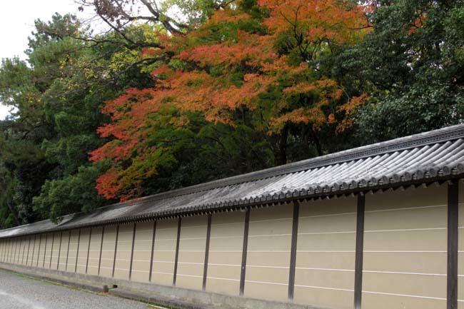 京都御苑も盛りに_e0048413_20001849.jpg