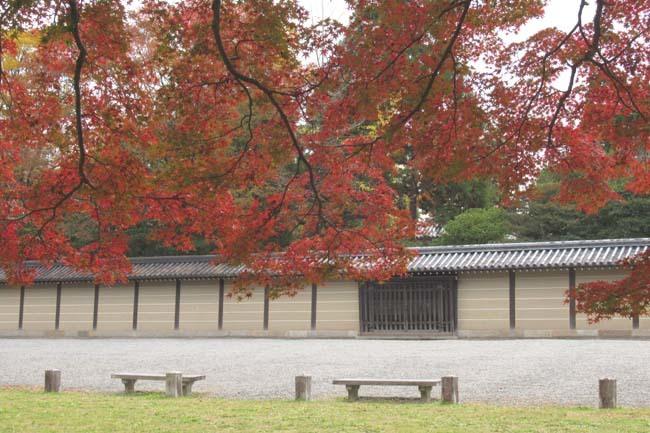 京都御苑も盛りに_e0048413_20002391.jpg