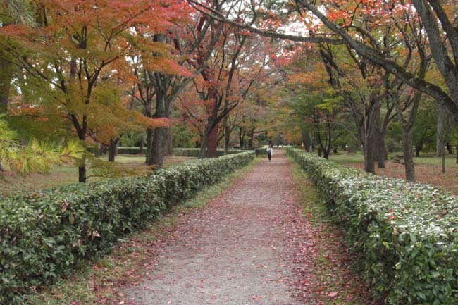 京都御苑も盛りに_e0048413_20003688.jpg