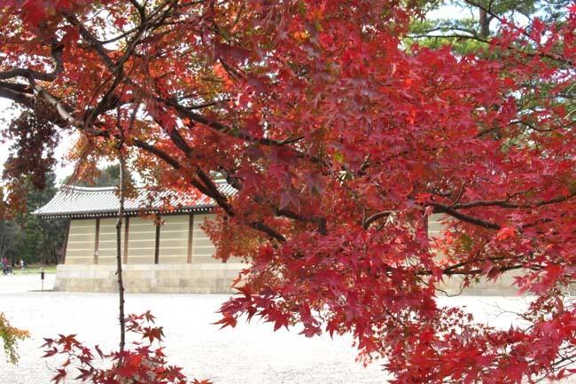 京都御苑も盛りに_e0048413_20003868.jpg