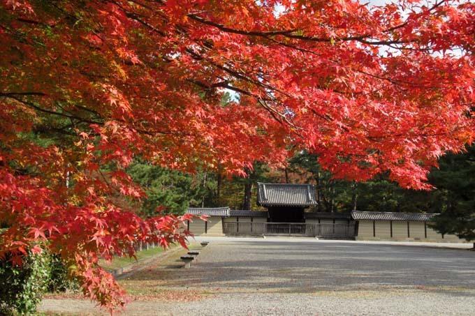 京都御苑も盛りに_e0048413_20004204.jpg