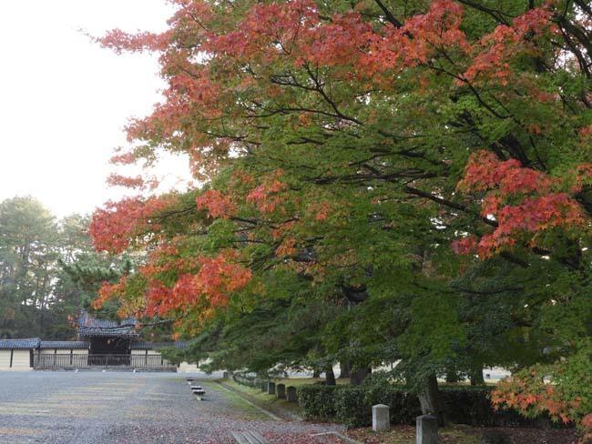 京都御苑も盛りに_e0048413_20004413.jpg
