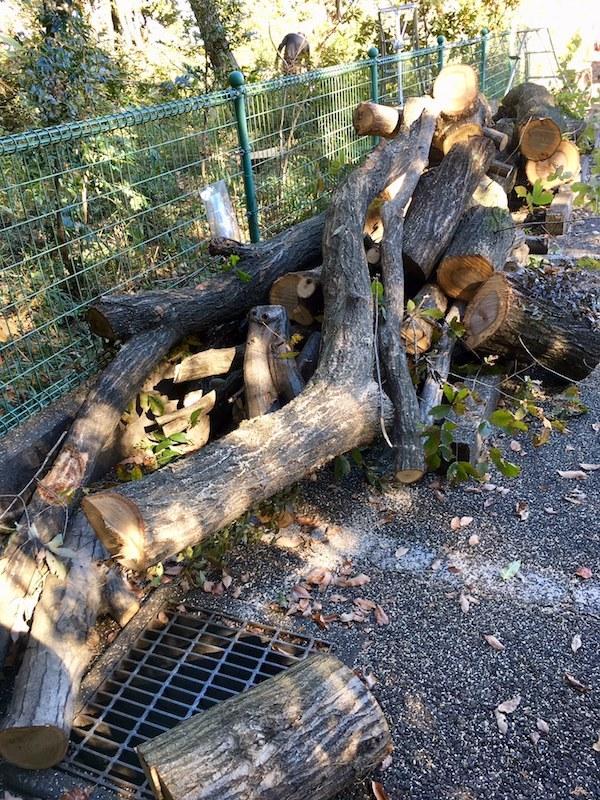 この冬初めての薪狩でした_b0038919_10064650.jpg