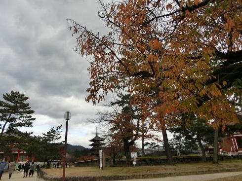 興福寺中金堂_d0085634_12192361.jpg