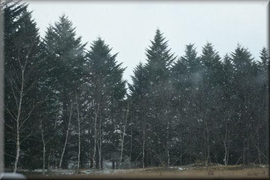 雪です!!_f0363141_08133487.jpg