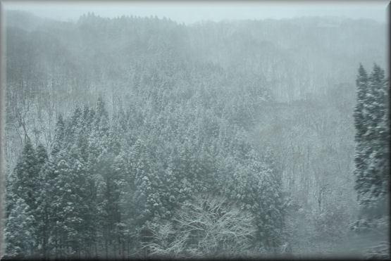 雪です!!_f0363141_08154888.jpg