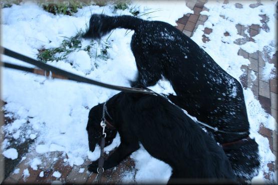 雪です!!_f0363141_08191680.jpg
