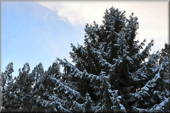 雪です!!_f0363141_08223631.jpg
