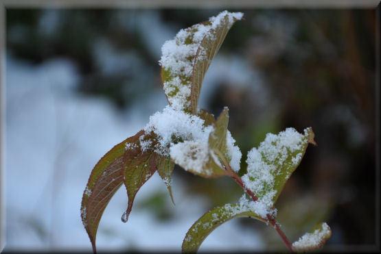 雪です!!_f0363141_08240807.jpg